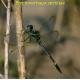 Brechmorhaga pertinax